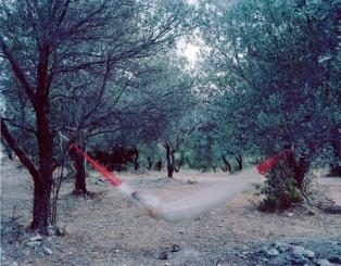 grove13