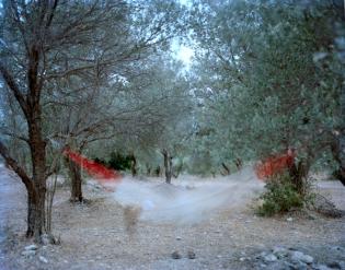 grove15